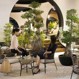 Turkish Airlines Tea Garden.jpg