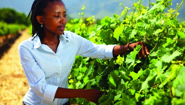 Nederburg's Viticulturist, Unathi Mantshongo at a vineyard.