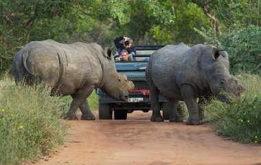 The African Safari Business